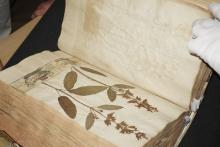 Blick in ein Herbarium-Buch aus der Gleimbibliothek. | © R. Wege